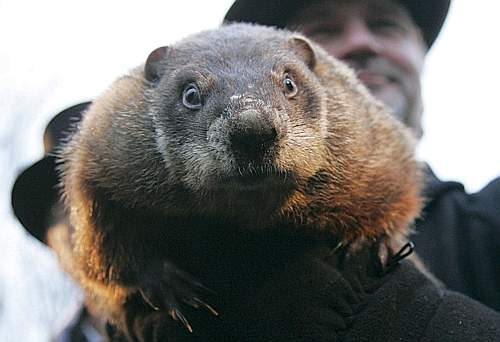Punxsutawney Phil the famous weather predictor