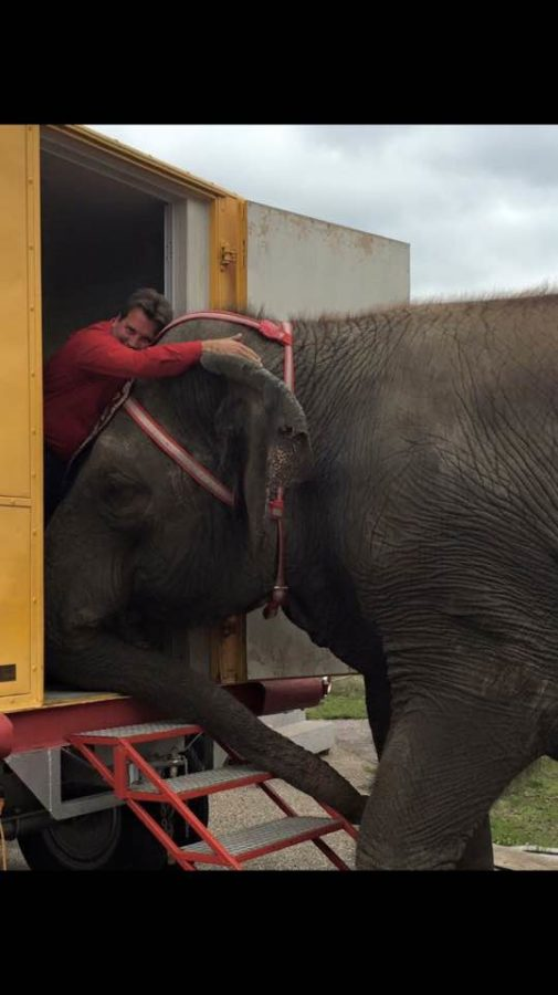 Chip Arthurs is an elephant trainer, here he is adoring the elephants.