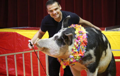 The performing pig, Roscoe is trained by Hans Klose for the circus every year.