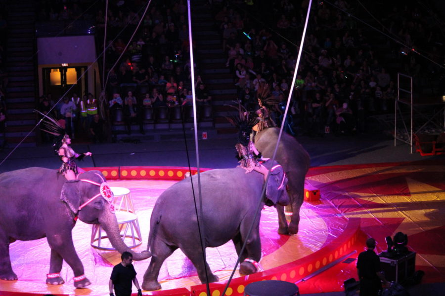 Aww.+The+elephants+enter+the+ring+as+the+crowd+aw%27s.+They+walked+in+circles+holding+each+others+tails.+