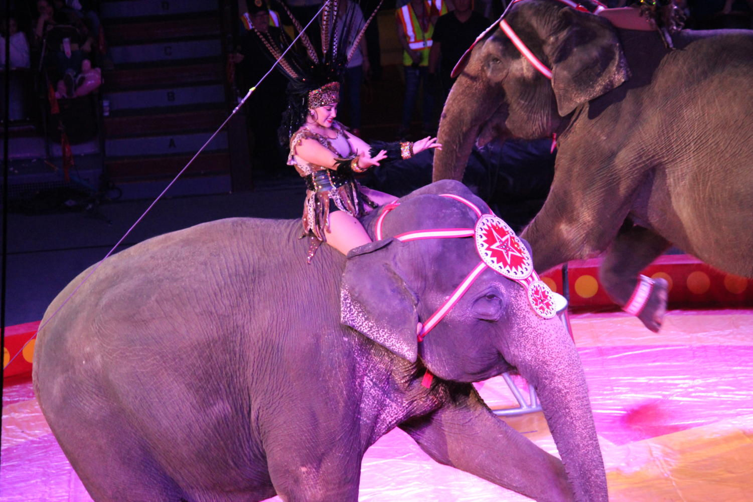 The Jaffa Shrine elephants perform at the circus on April 12!