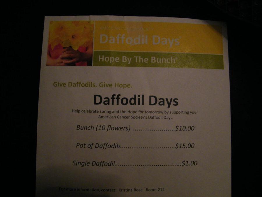Daffodils+sales+help+American+Cancer+Society