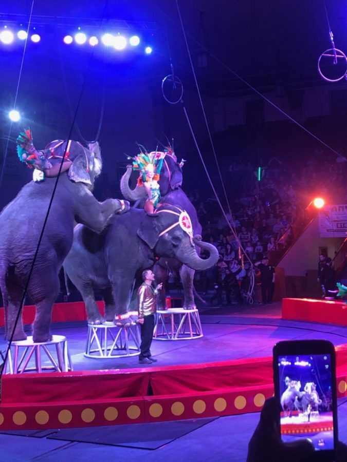 Jaffa Shrine hosts yearly circus