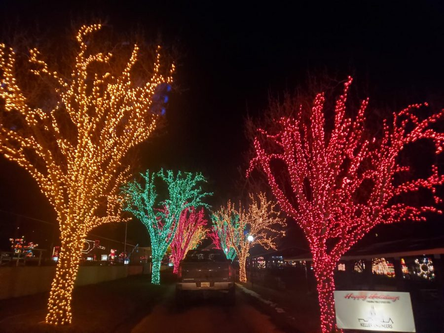 This photo displays one of the drive-thru exhibits at Holiday Lights on the Lake. Trees wrapped in lights create an interesting effect from the base to the top of the branches.